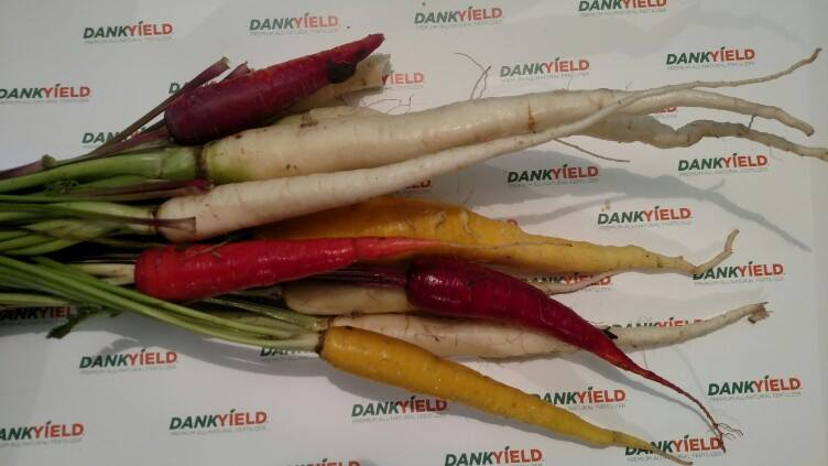 DankYield Natural Nutrients / Klingfisher Enterprises