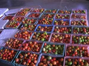 tomatobaskets
